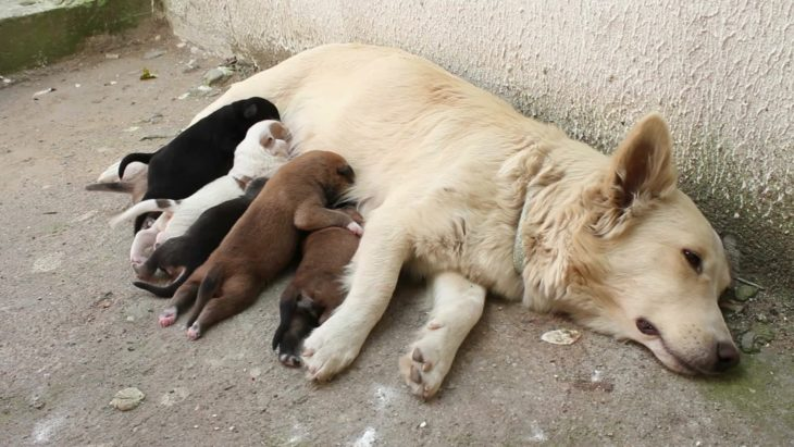 mamá perro amamantando a sus cachorros