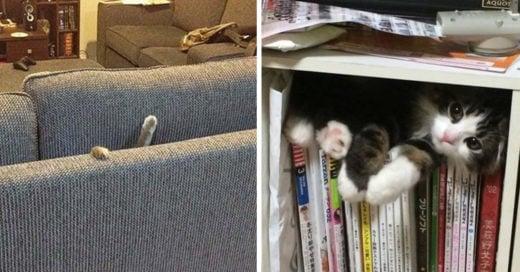 Gatos que se esconden en los lugares más insolitos