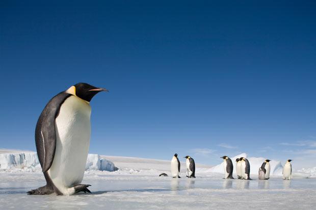 pinguinos en la Antártica