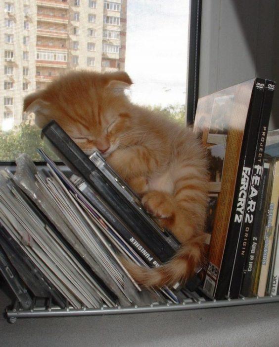 Gato pequeño durmiendo sobre estante de discos compactos
