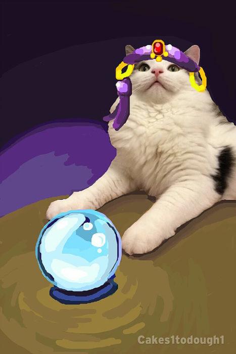 snapchat de gato con bola de cristal