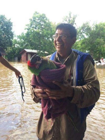 rescate guacamaya