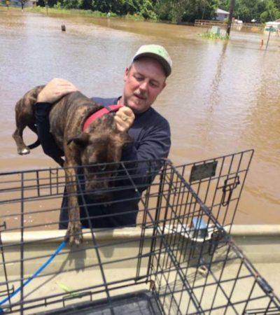 rescate perros