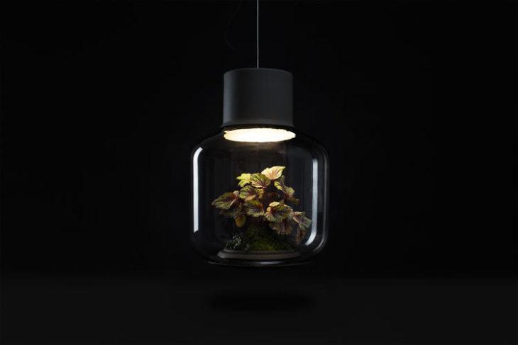 lampara que por dentro tiene ecosistema
