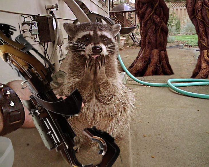 un mapache emocionado