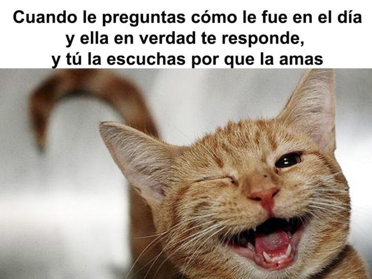 meme de un gato sobre amor