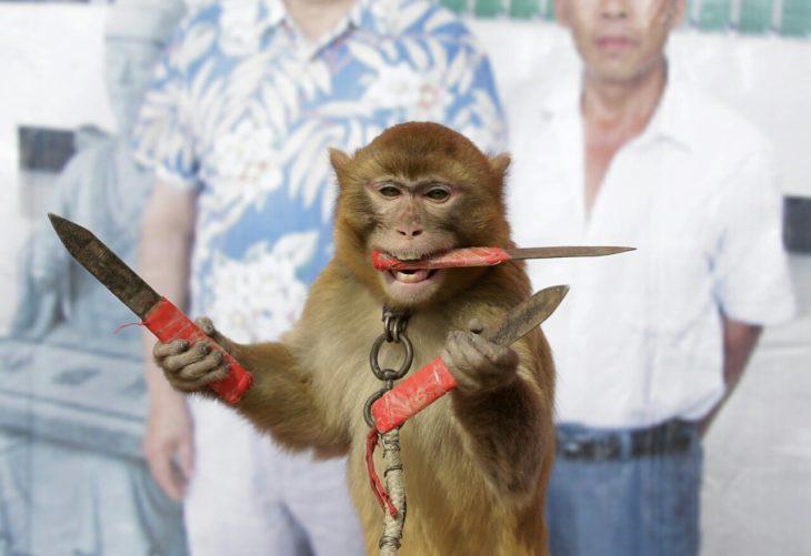 mono sosteniendo cuchillos