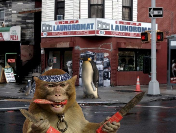 mono con cuchillos en la calle