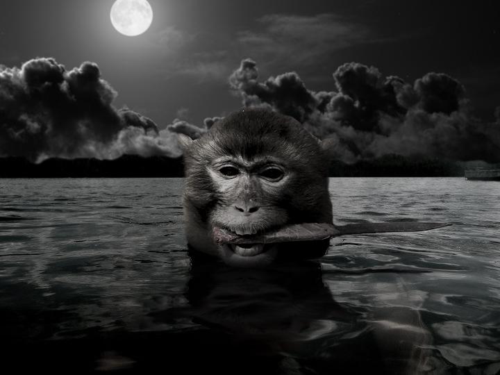 mono con cuchillo en el hocico