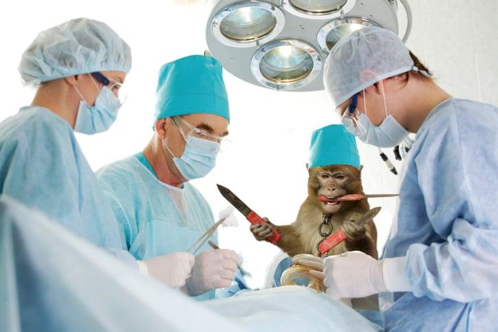 mono con dagas en quirófano