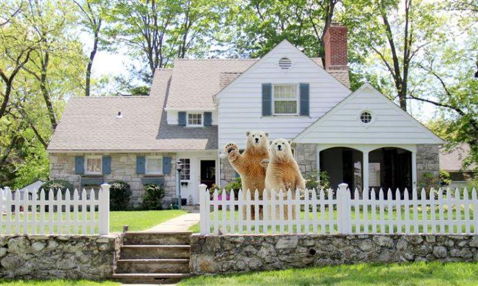 osos polares en jardín de casa americana