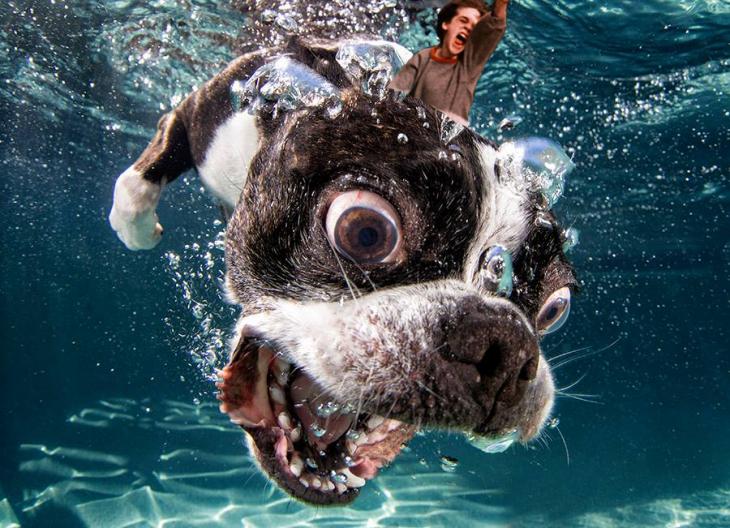Photoshop niño de la película Historia sin fin montado en un perro que no es el de la película