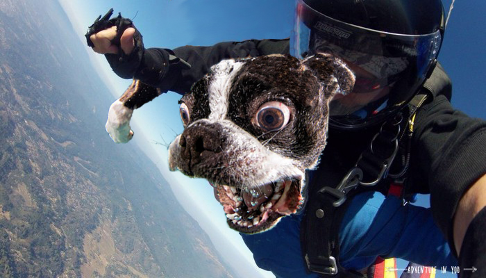 Photoshop perro en paracaídas
