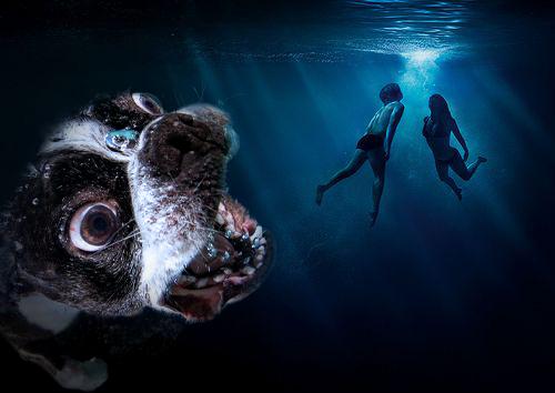 Photoshop cara de un perro en el mar y al fondo se ven dos personas