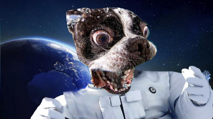 Photoshop. Astronauta con cara de un perro