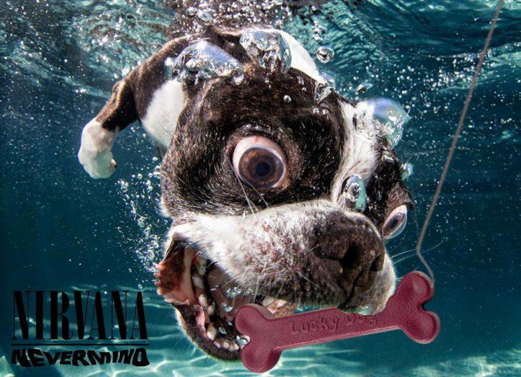 Photoshop. Perro debajo del agua haciendo como si fuera la portada del disco de Nirvana
