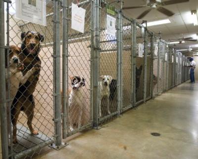 Photoshop imagen de una perrera uno d elos perros tiene la cara sobrepuesta de otro perro