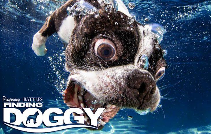 Photoshop, foto de un perro y el titulo de Finding Doggy en lugar de Finding Nemo