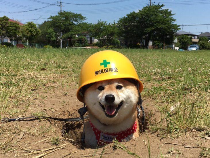 perro con casco en hoyo