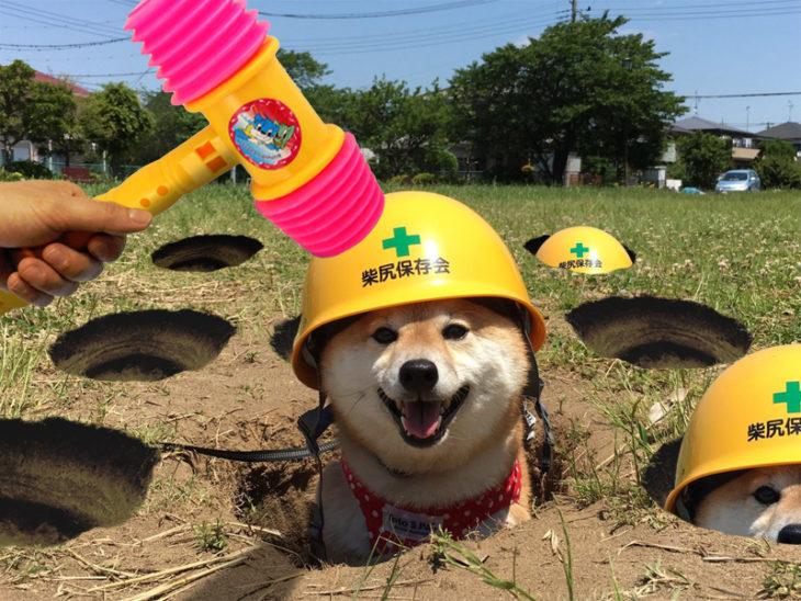 perro con casco en hoyos en el piso simulando juego