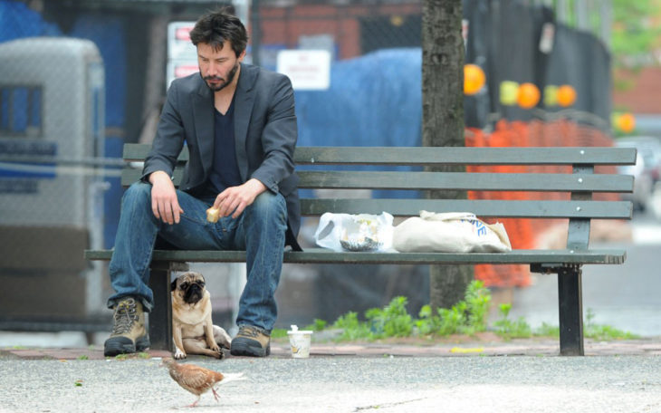 pug triste y keanu reeves photoshop