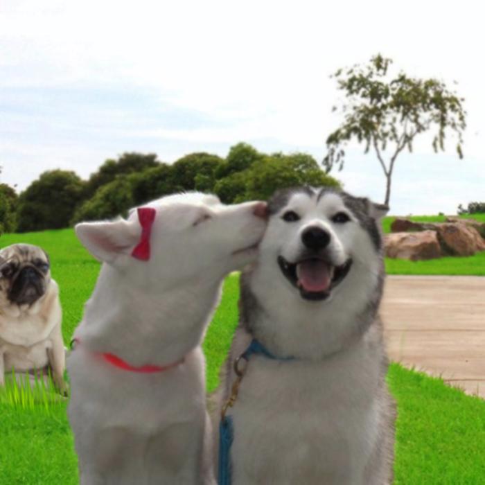 photoshop, perro pug triste observa perros besandose