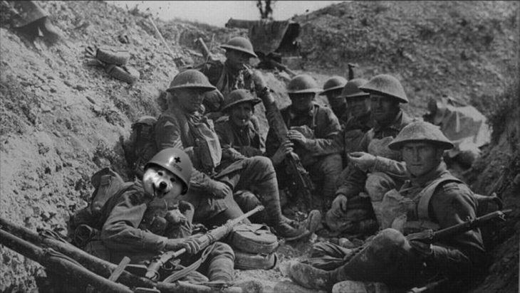 perro con casco en batalla con soldados
