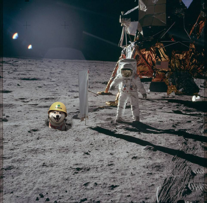 perro en la luna