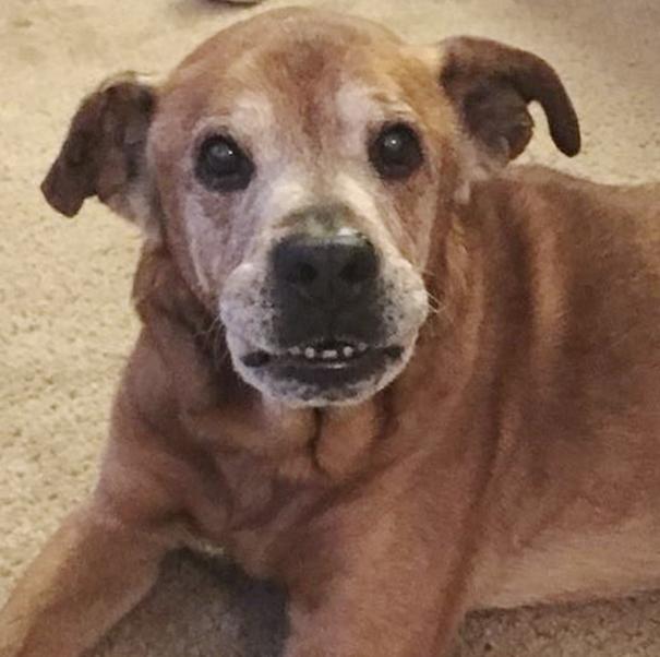 Rocky, perro de 17 años adoptado
