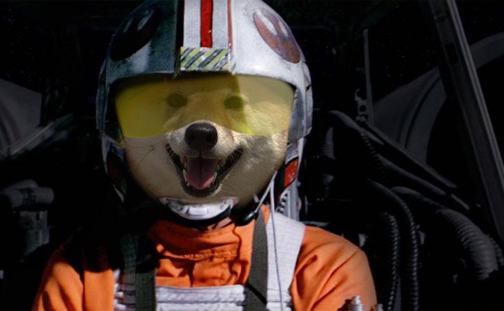 perro con casco como aviador