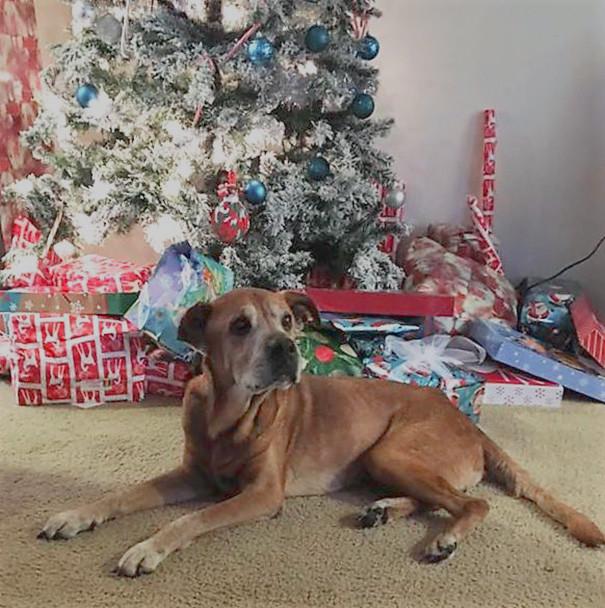 perro recostado delante de árbol de navidad