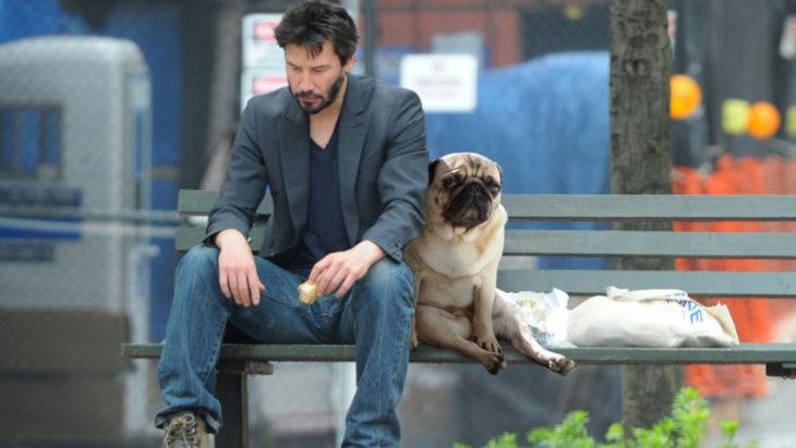perro pug triste, en la calle.