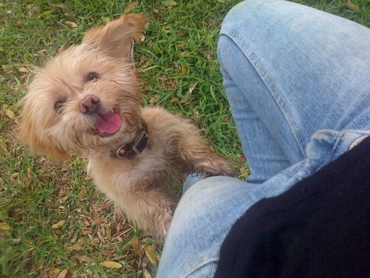 Foto de un perrito brincando en la pierna de su dueño
