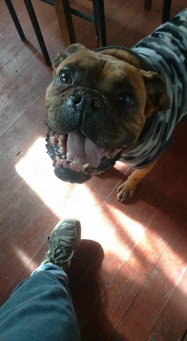 Foto de un perro con sueter militar volteando a ver a su dueño