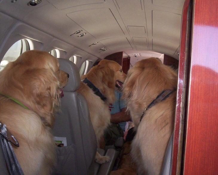 avión lleno de perritos