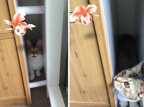gato viendo pokemón