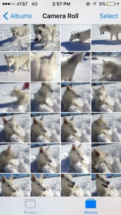 muchas fotografías de perro en celuar