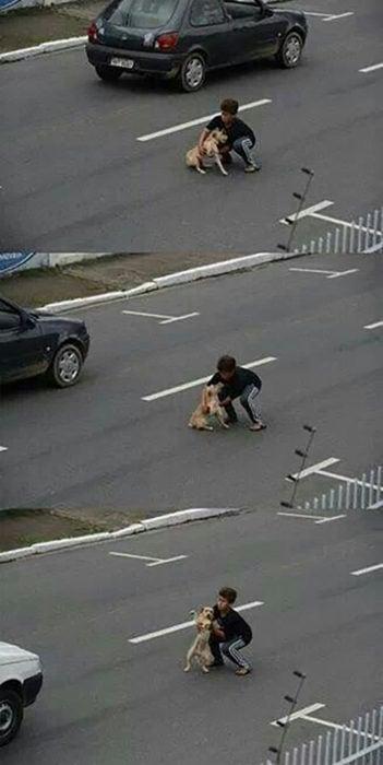niño ayuda a un perro atropellado