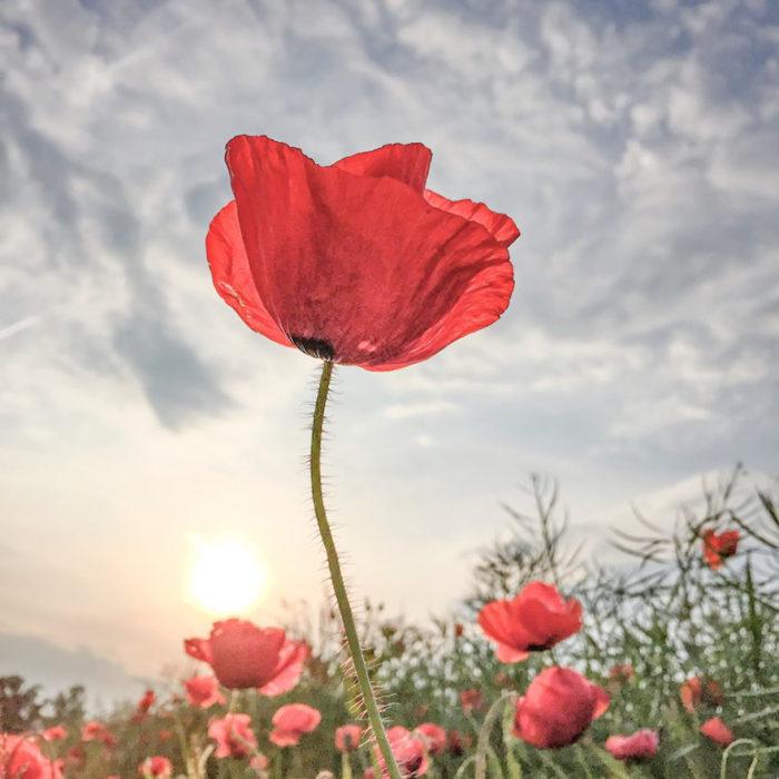 fotografía de una flor tomada con iphone