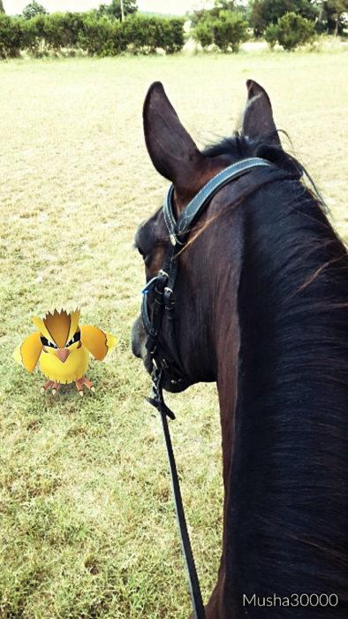 caballo y pokémon