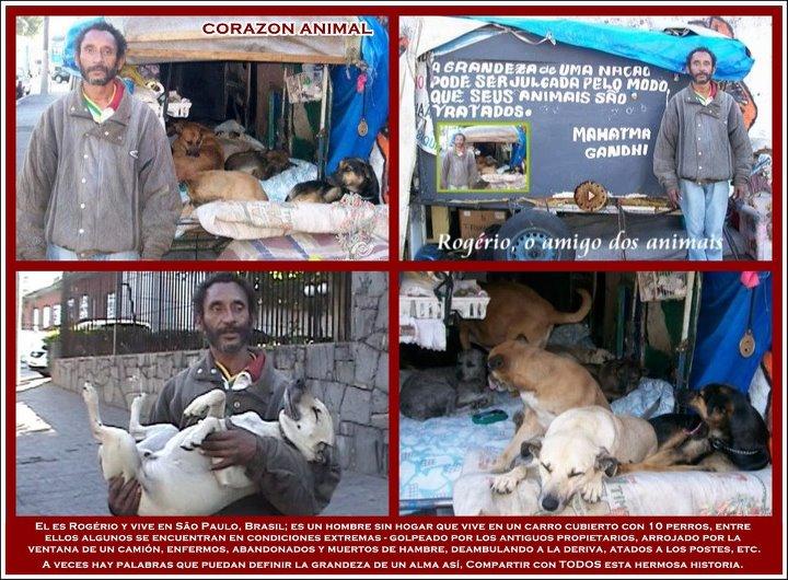hombre sin hogar hace un refugio a perros de la calle