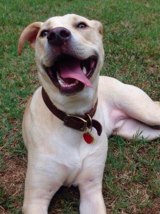 perro blanco sonriendo
