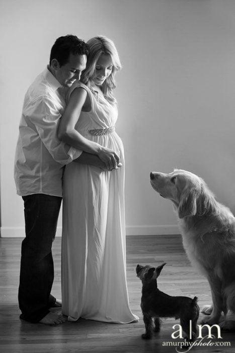 esposos con perros fotografía de embarazo