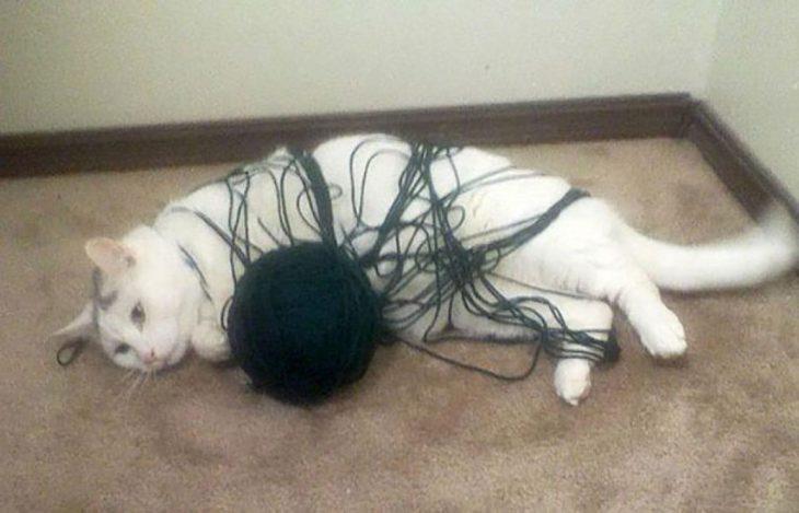gato enredado en estambre