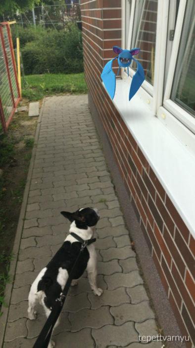 perro con manchas negras viendo un pokémon