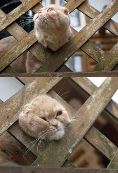 Gatos se arrepintieron de inmediato de sus malas decisiones