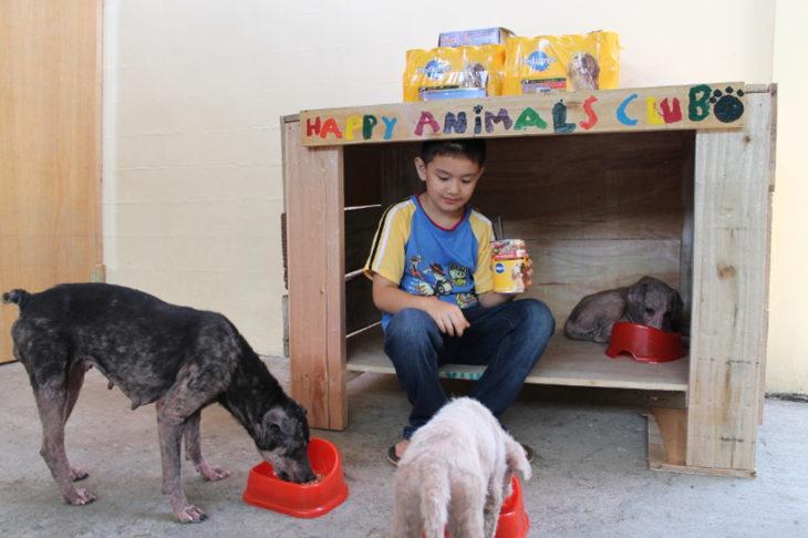 niño alimenta a animales de la calle