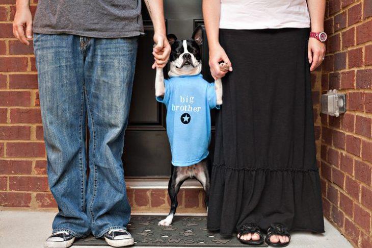 fotografía anuncio de embarazo con perrito