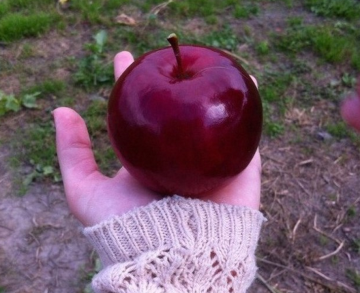 manzana perfectamente redonda