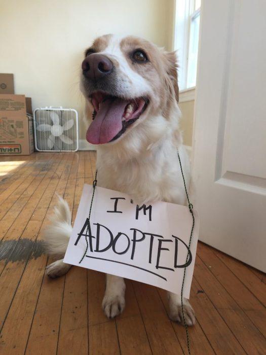 perrito con cartel de he sido adoptado
